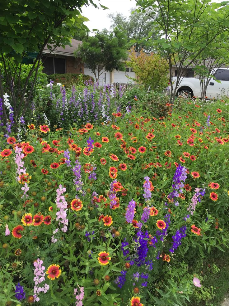 17 Best Images About Around My Drought Tolerant Yard And