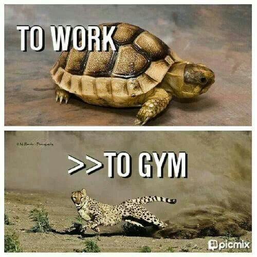 fitness motivation humor animals turtle cheetah