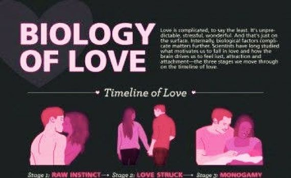 What keeps people together long after the sparks start flying? Lust, attraction or attachment? It's all about biology, love.