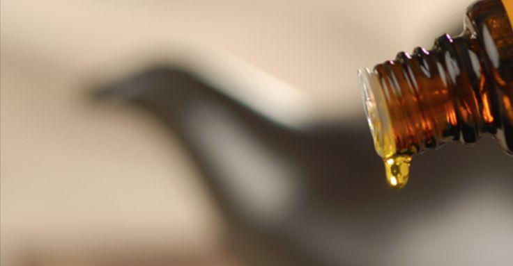 Huile essentielle : L'huile essentielle d'encens est connue comme la reine des huiles essentielles, et elle mérite vraiment ce titre. Je l'utilise