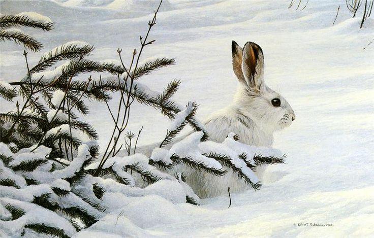 Winter Snowshoe Hare-Robert Bateman