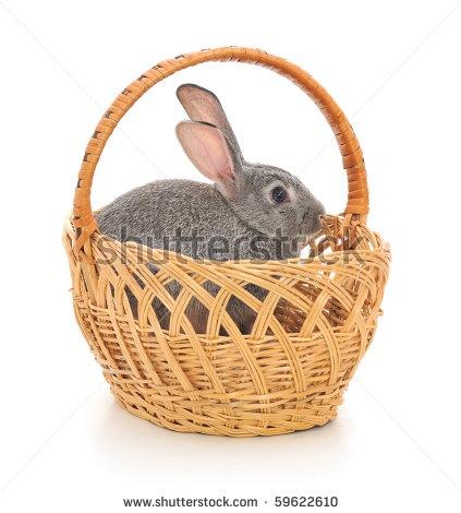 Rabbit Photography Stock Photos, Rabbit Photography Stock Photography, Rabbit Photography Stock Images : Shutterstock.com