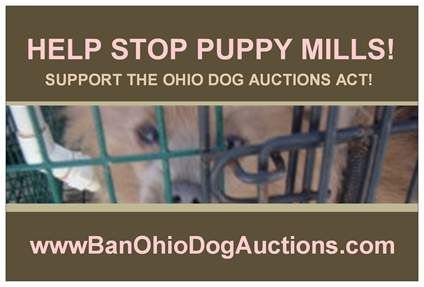 Dog Rescues In Lorain County Ohio