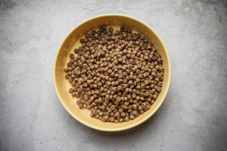 With rising concerns over the preservatives and additives in commercially prepared dog foods, homemade canine kibble is more popular than ever. Before...