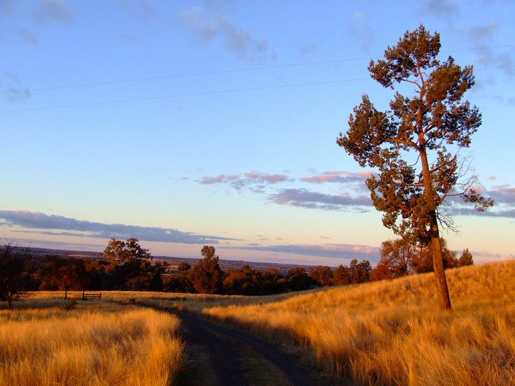 Winter in Dubbo NSW Australia
