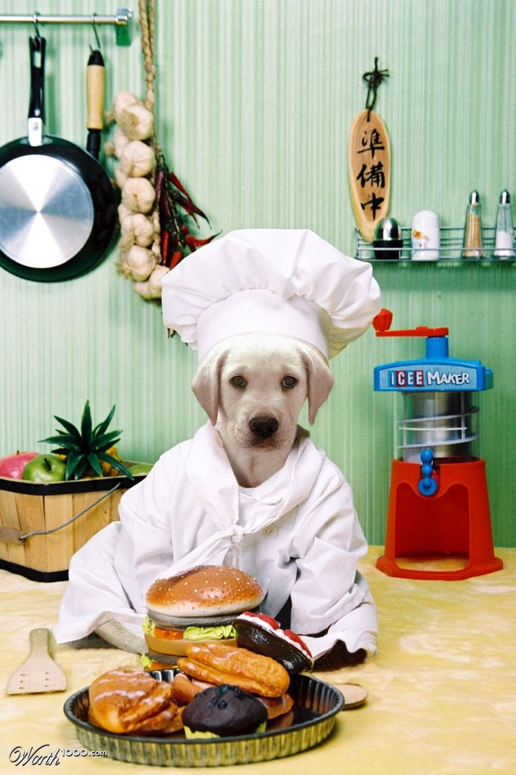 Dog Chef Worth1000 Contests Animal & Kid Chefs