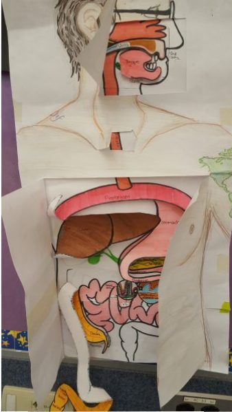 Biology – Digestive system overlay visual project