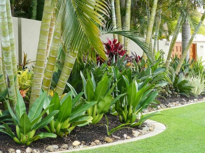 1000 id es sur le th me tropical pool landscaping sur - Amenagement jardin sans pelouse ...