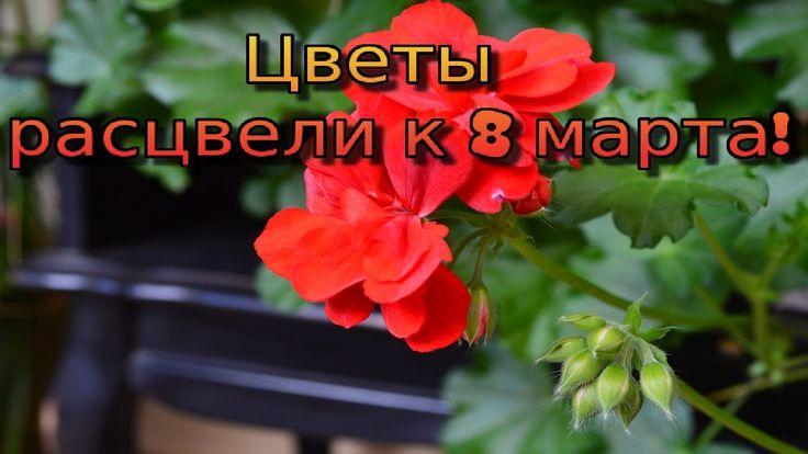 Цветы к 8 марта!  Веранда в цвету!
