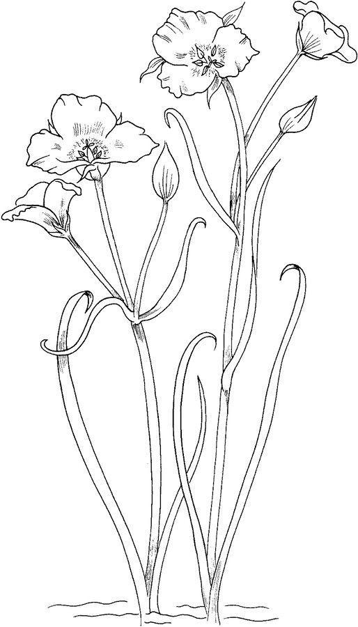 Lilien Ausmalbilder Blumen Pflanzen Malen Zeichnen