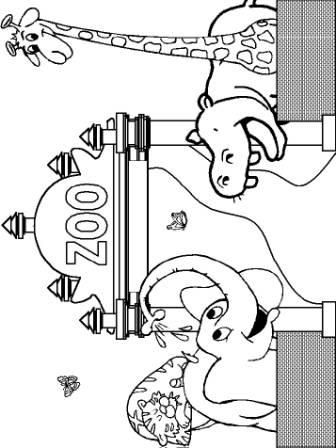 Animal Coloring Sheets Preschool : 64 best coloring pages printable images on pinterest