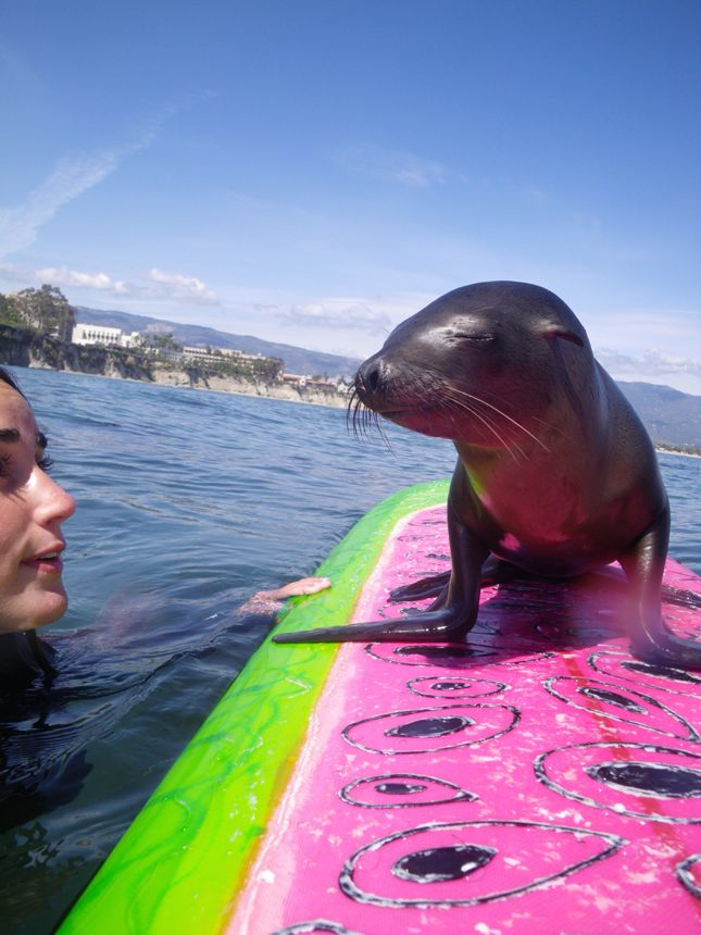 Slice of Life blogger, Stephanie meets with a cute seal. http://blog.swell.com/slice-of-life-seal-surfboard
