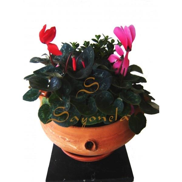 Arreglo compuesto por:        2 Violetas de los Alpez (Flor diferente Color)      1 Pescadito      Base en Barro Rustico