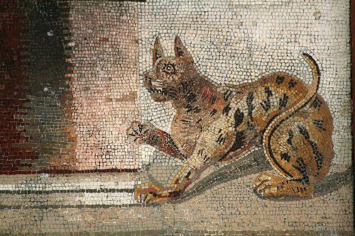 Mosaico de gato, Casa del Fauno, Pompeya