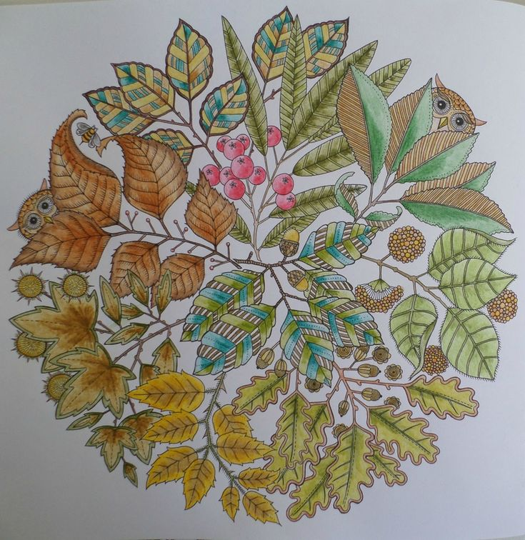 114 les meilleures images concernant coloriage steffy for Jardin secret des hansen