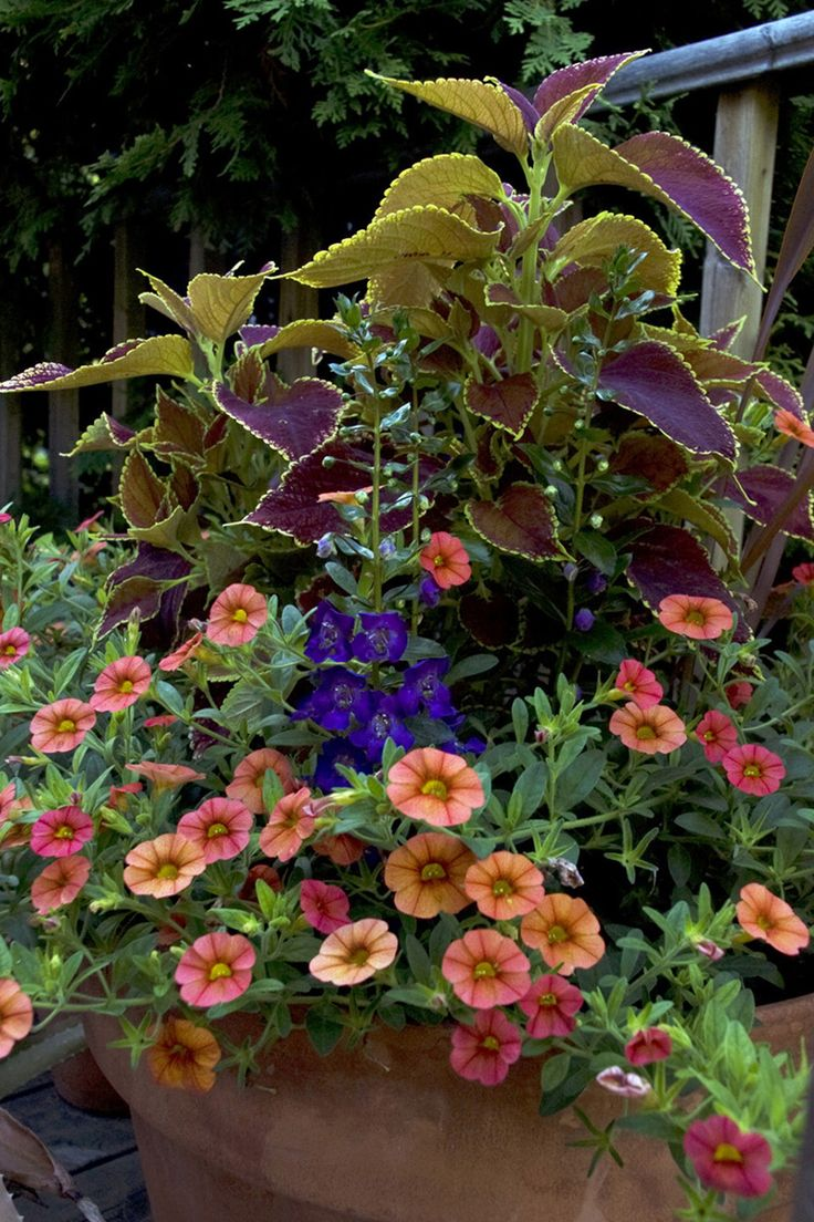 875 best Landscaping with Planters and Containers images