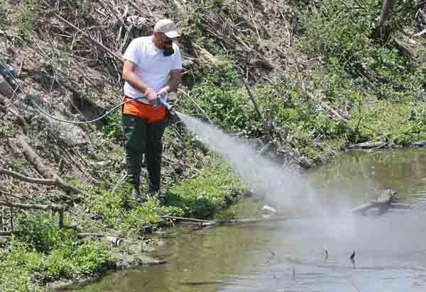 ΡΟΔΟΣυλλέκτης: Κουνούπια φέρνει η καλοκαιρία και μαζί τους ... αρ...