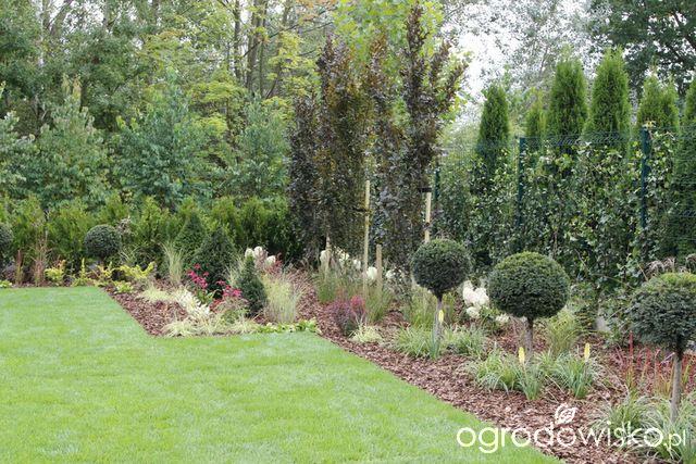 Ogród z lustrem - strona 328 - Forum ogrodnicze - Ogrodowisko