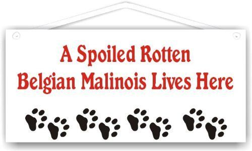A Spoiled Rotten Belgian Malinois Lives Here
