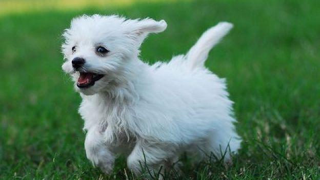 Come giocare col cane: le regole base