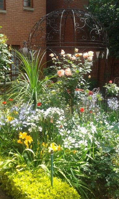 Agapanthas, Daylilies and rose. December 2014