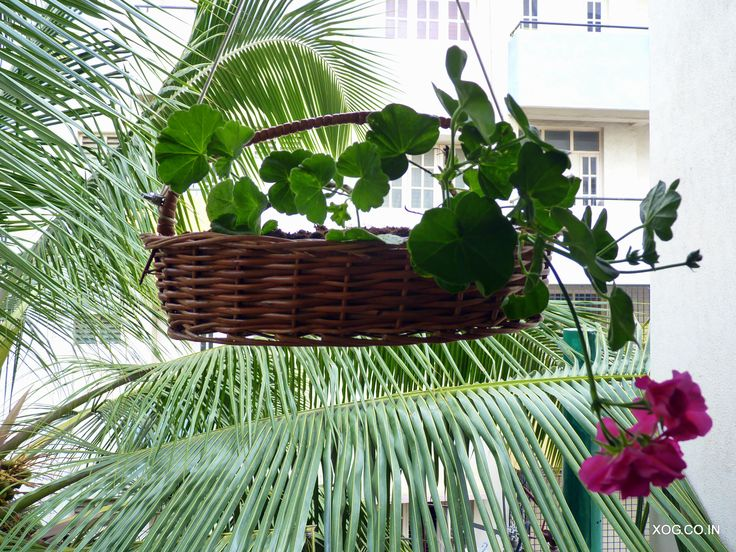 Cane hanging baskets by XOG