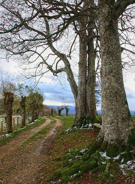Along the Camino - Roncesvalles - Prov. Navarra, Spain