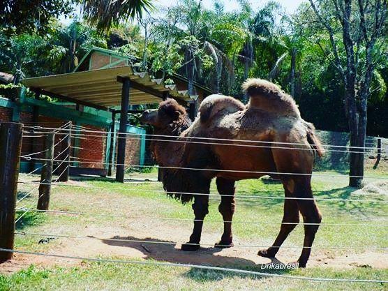 Zoológico de Bauru                                                                                                                         ...
