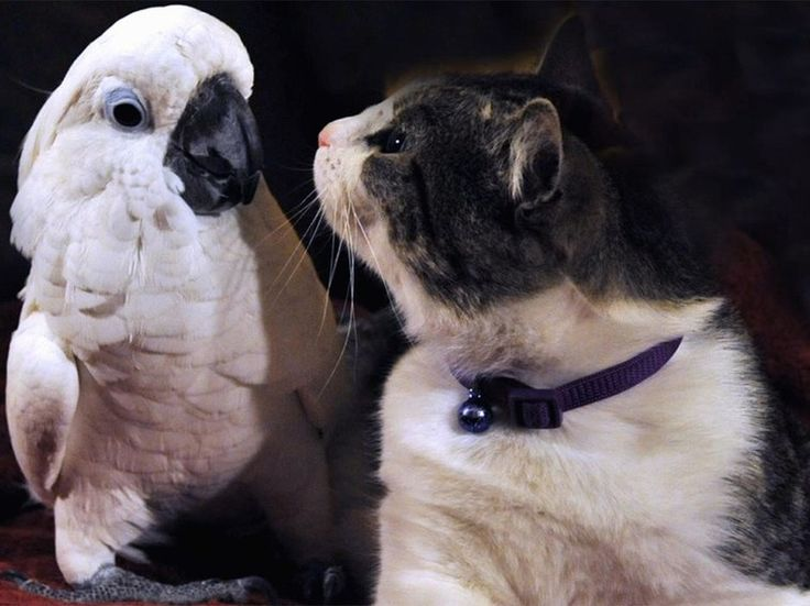 The Tale of the Cockatoo and the Kitty Cat - Unlikely Animal Friends Gallery - Nat Geo WILD