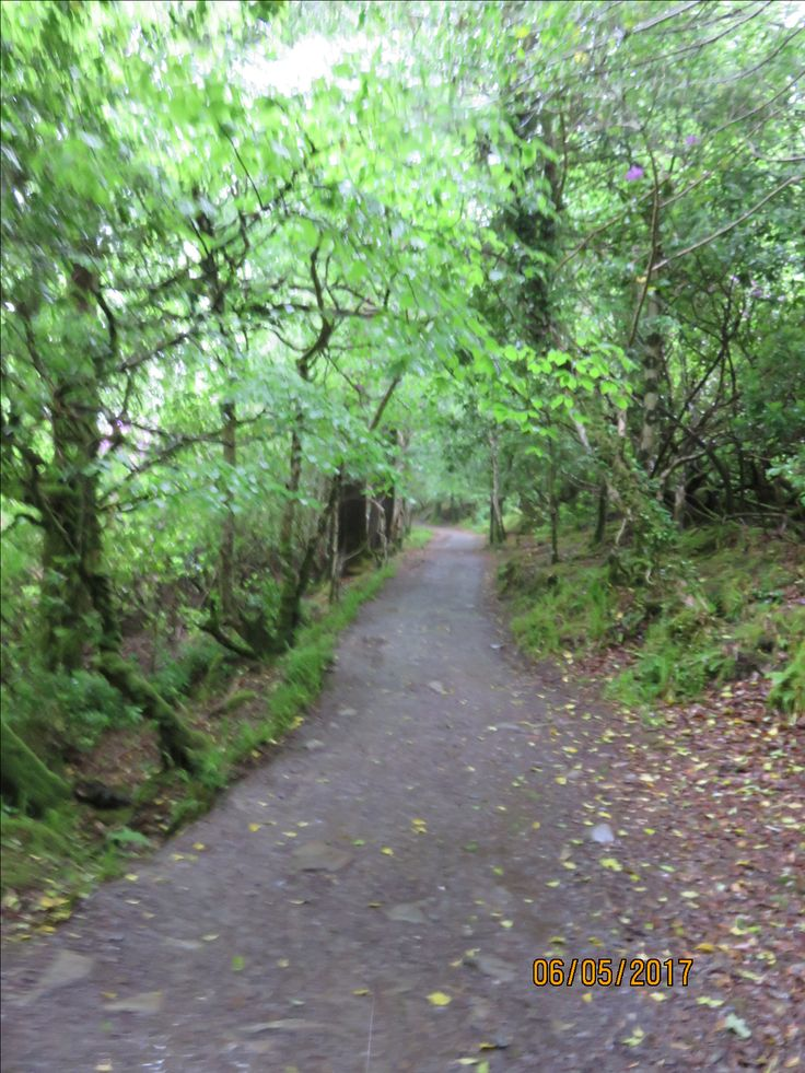 Rainy woodland walk on way to Torc Waterfall