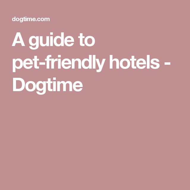A guide to pet-friendly hotels - Dogtime