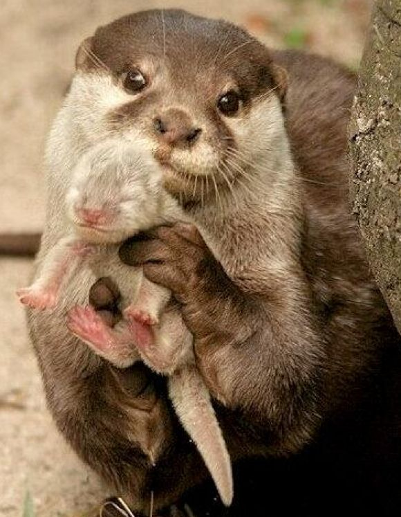 25 Of The Cutest Otters To Ever Grace This Planet