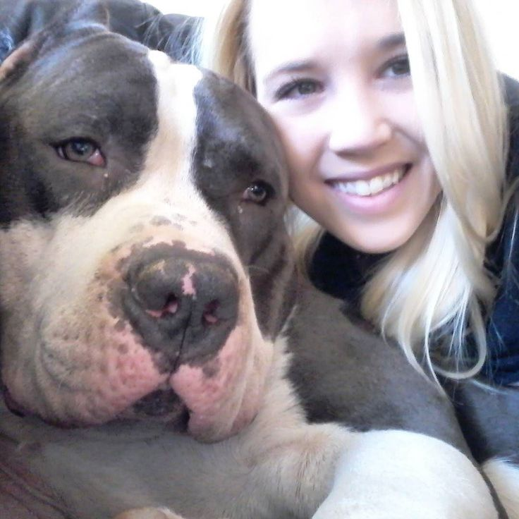 My big buddy he is the perfect pillow . All our dogs have amazing temperament…