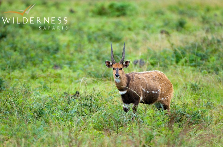 Chelinda Camp - From a game viewing perspective, a variety of animals can be seen around Chelinda Camp - particularly in the famous Nyika Grasslands. #Safari #Africa #Malawi #WildernessSafaris