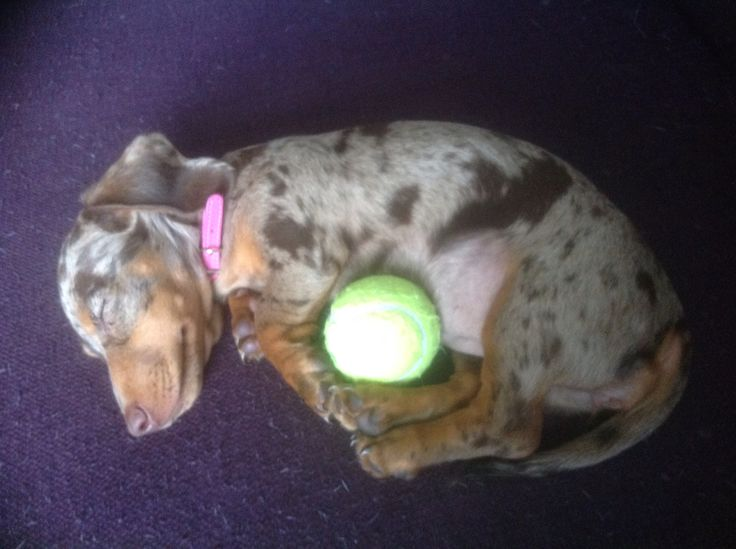 Cuddles with the ball