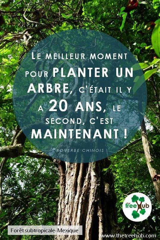 10 best images about proverbe chinois on pinterest ombre genealogy and planters. Black Bedroom Furniture Sets. Home Design Ideas