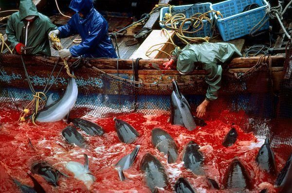 .@HuffPostGreen Please help end the slaughter #JPOlyBoycott