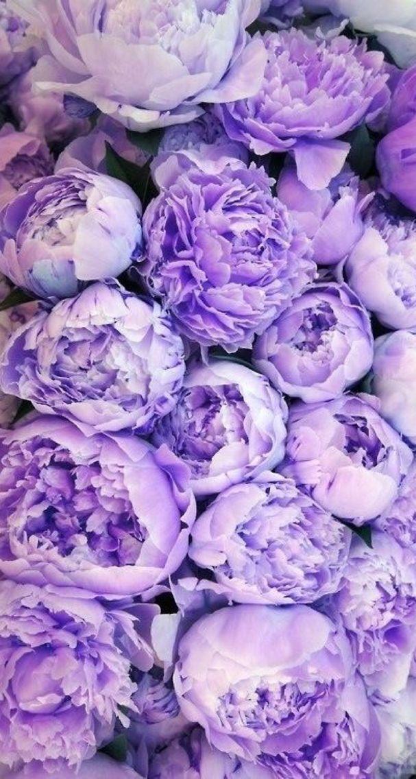 Обои для айфона цветы