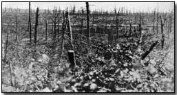 Comprising the main Allied attack on the Western Front during 1916, the Battle of the Somme is famous chiefly on account of the loss of 58,000 British troops (one third of them killed) on the first day of the battle, 1 July 1916, which to this day remains a one-day record....