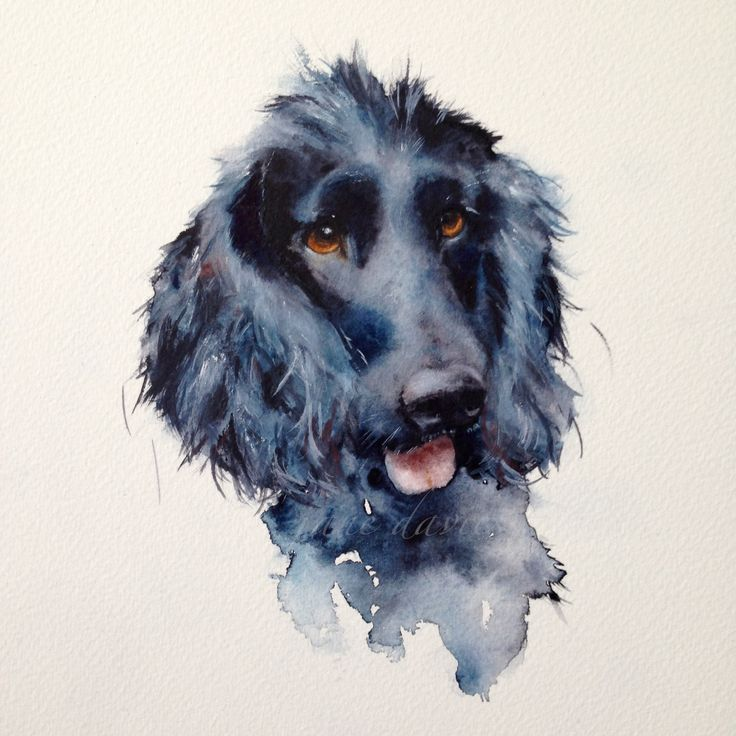 black cocker spaniel dog a watercolour painting by artist jane davies