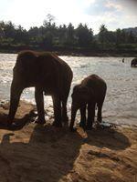 Elephants, Mom n Baby