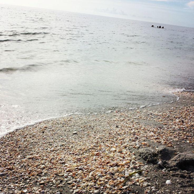 Captiva Island: 156 Best Captiva Island Images On Pinterest