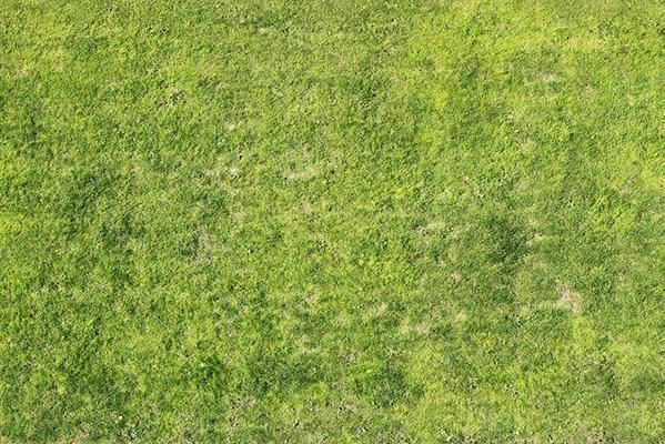 40 Grass Texture With High Res Quality Texture Grass Photoshop