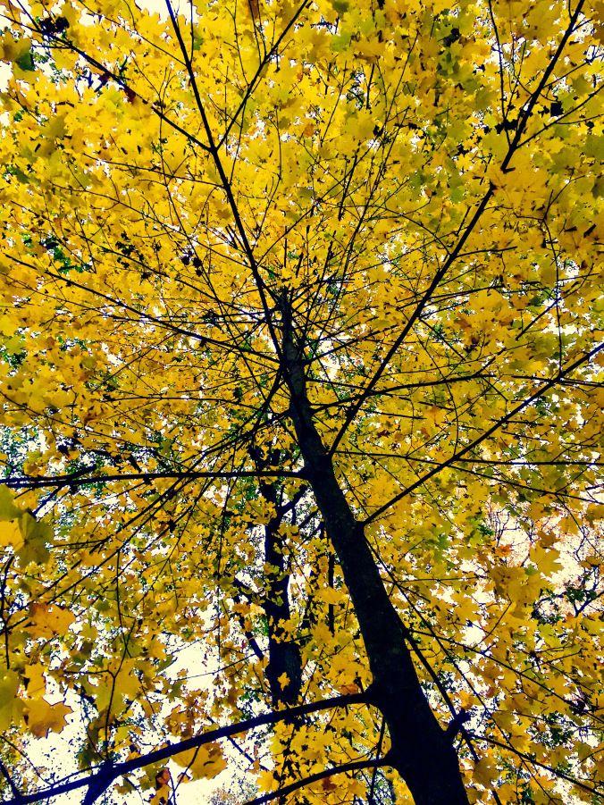 Autumn | Sunny District