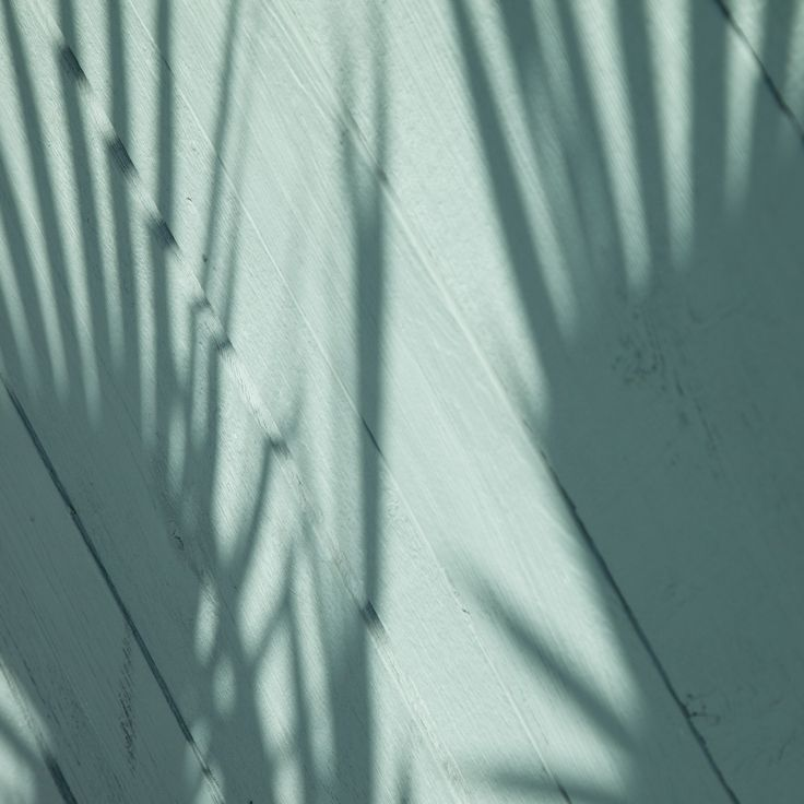Palm tree shadows on the wall