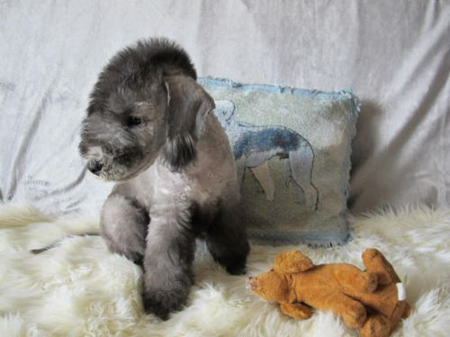 bedlington terrier puppy - Google Search