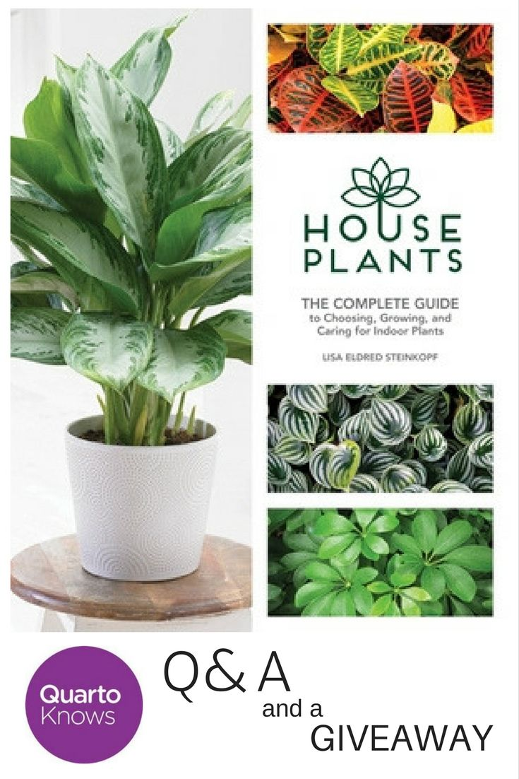 Q & A with Lisa Eldred Steinkopf, author of House Plants: The Complete Guide