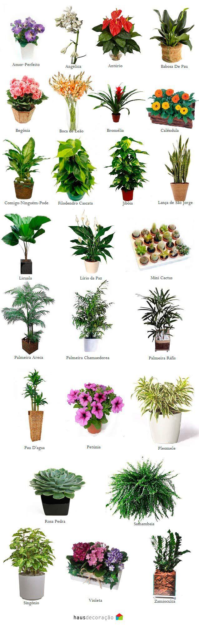 Diversos exemplos de jardim de inverno, dicas de plantas que se usa em ambientes internos, manutenção e muito mais. Clica ai e confira :)