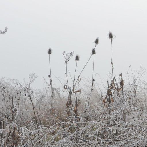 #wildgarden#burgundy#garden#landscape#design#aureliegueniffey#winter