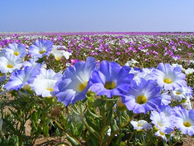 The National Parks of the Atacama Desert - Chile Responsible Adventure